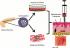 Обещаващи резултати на подкожнa трансплантация при захарен диабет тип 1